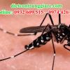 Kiểm soát muỗi quận 7 giá rẻ