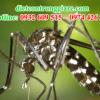 Kiểm soát muỗi quận 8 giá rẻ