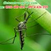 Kiểm soát muỗi chuyên nghiệp tại hcm
