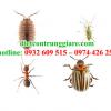 Kiểm soát côn trùng gây hại Bình Chánh