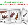 Kiểm soát côn trùng gây hại Bình Tân