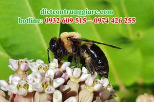 Ong thợ mộc có ăn gỗ không?