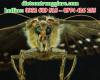 Tại sao côn trùng biến mất?
