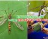 Top những côn trùng ăn muỗi
