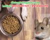 Chuột có ăn thức ăn của chó không?