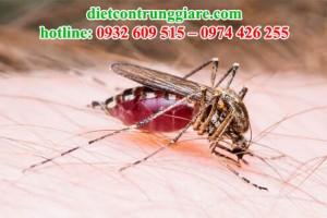 Muỗi có máu không?