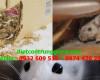 5 dấu hiệu nhận biết chuột