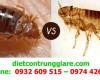 Cách phân biệt bọ chét và rệp giường