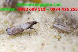 Mẹo kiểm soát bướm đêm hiệu quả
