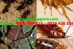Top côn trùng gây hại thường gặp