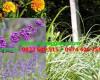 12 loài cây đuổi muỗi hiệu quả