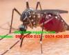 6 sự thật về muỗi