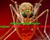 Các loài muỗi phổ biến nhất
