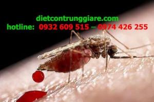 Các triệu chứng khi bị muỗi cắn