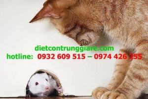 5 dấu hiệu có chuột trong nhà