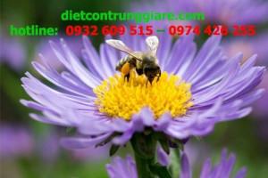 Cách đuổi ong ra khỏi nhà