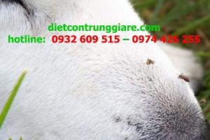 Muỗi có cắn chó không?