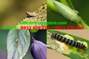 7 loại côn trung gây hại trong vườn