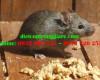 Phải làm gì khi mồi chuột bị đánh cắp nhiều lần