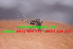 Tác hại của muỗi Aedes aegypti