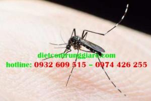 Tác hại của muỗi là gì?