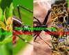 Côn trùng gây hại mùa hè