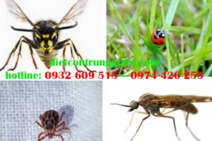 Những côn trùng gây hại mùa hè