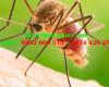 Thuốc diệt muỗi nào tốt?