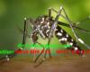 Thuốc nào có tác dụng đuổi muỗi?