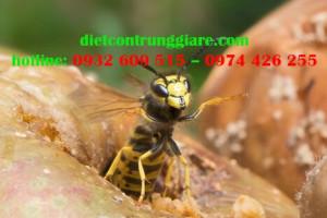 Thức ăn của ong là gì ?