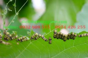 5 côn trùng gây hại mùa hè thường gặp