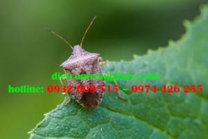 6 cách loại bỏ bọ xít