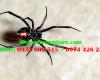 6 loài nhện nguy hiểm nhất
