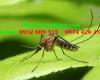 Kiểm soát muỗi chuyên nghiệp