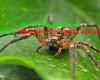 Kiểm soát nhện chuyên nghiệp