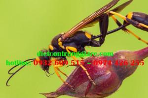 Kiểm soát ong chuyên nghiệp