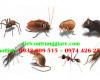 Những côn trùng cắn thường gặp