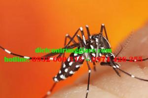 Cách kiểm soát muỗi hổ châu Á