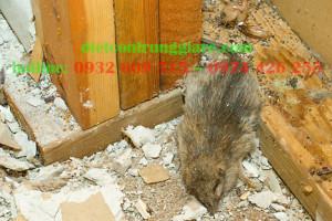 Cách xử lý mùi chuột chết