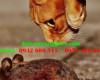 Mèo có ăn chuột không?