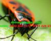 Cách thoát khỏi bọ xít hiệu quả nhất