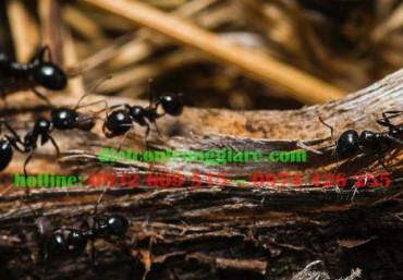 Thuộc địa và cấu trúc của kiến
