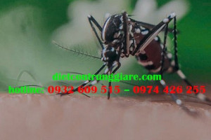 Muỗi đực hay muỗi cái cắn