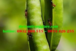 Cách xử lý vết cắn của kiến lửa