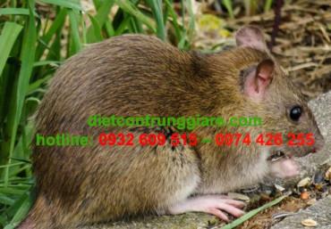 Chuột thích ăn gì nhất?