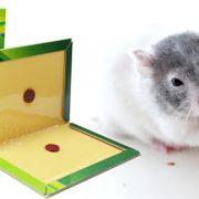 Keo dính chuột giá rẻ