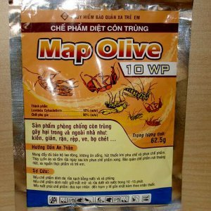 Map Olive