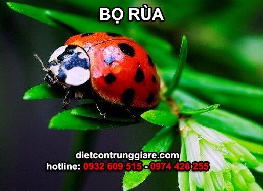 tìm hiểu về loài bọ rùa