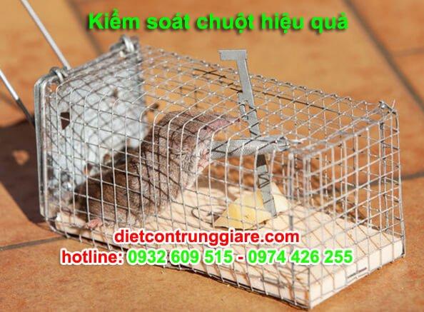 ba bước kiểm soát Chuột tại nhà