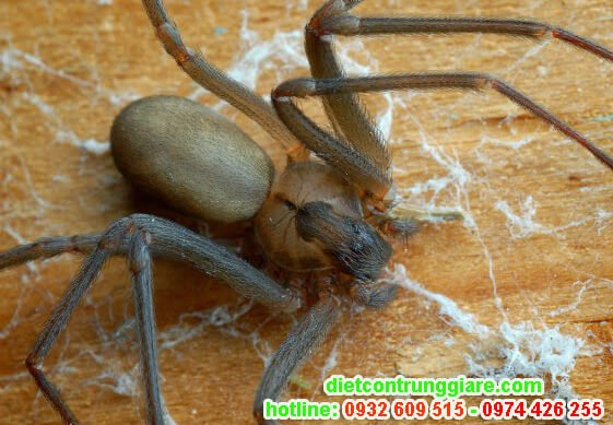các loài nhện nguy hiểm và có độc
